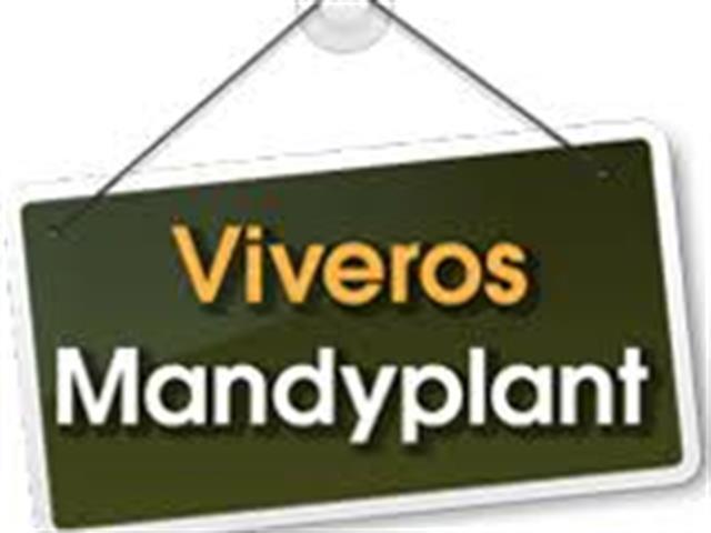 GARDEN CENTER MANDYPLANT S.L., VIVERO EN BADAJOZ, PLANTAS EN BADAJOZ ...