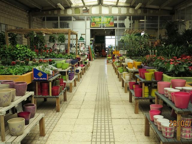 garden center mandyplant s l vivero en badajoz plantas