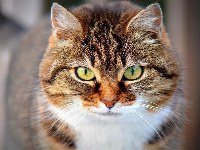 Getafe regulariza las colonias felinas y firmará convenios con el voluntariado