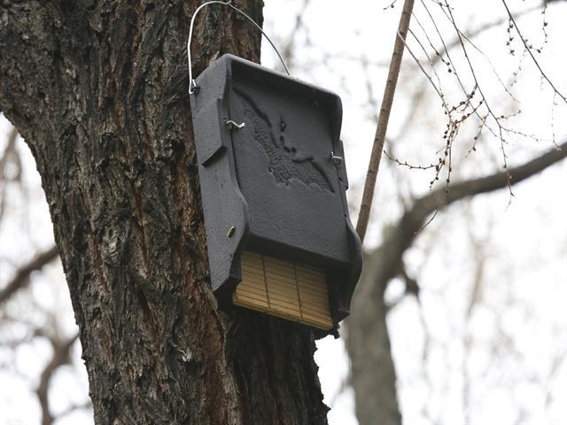 El Ayuntamiento pone en marcha un programa de control de plagas a través del uso de cajas refugio de murciélagos