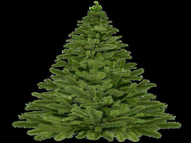 Desde hoy 8 de enero, el Ayuntamiento de Torrejón recogerá los árboles navideños de los vecinos para replantarlos en las zonas verdes de la ciudad