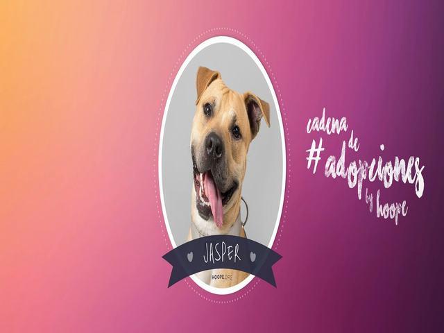 HOOPE, Asociación, Protectora de Animales,adopciones, perros, gatos,Torrejon de Ardoz, Corredor del Henares