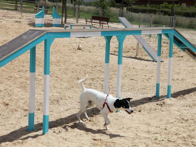 Aprobada definitivamente la ordenanza que regula las áreas caninas de Getafe