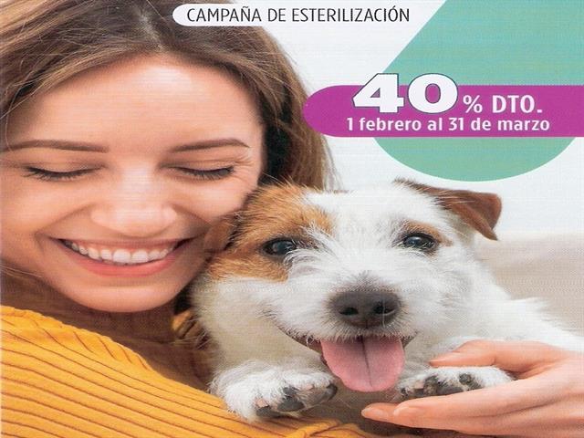 Campaña esterilización 40% de descuento